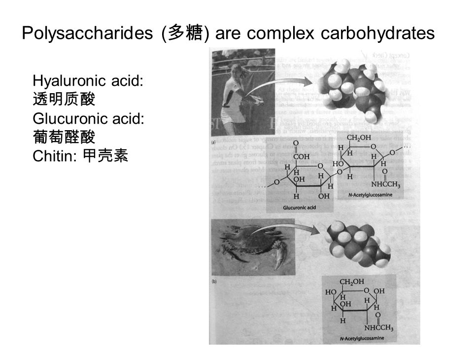 The polysaccharides of the human diet are made only of glucose.