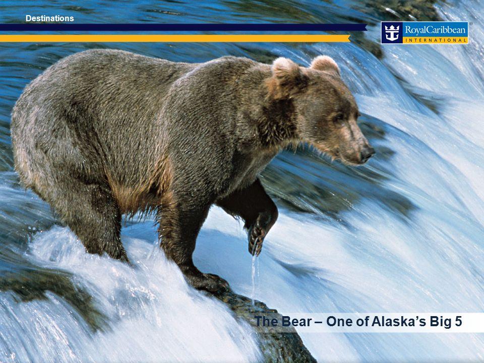 The Bear – One of Alaska's Big 5 Destinations