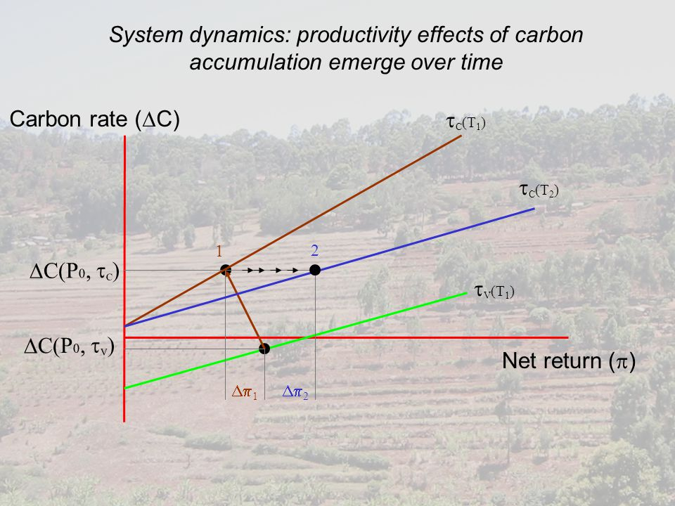 Net return (  ) Carbon rate (  C)  C(P 0,  C )  C(P 0,  V ) System dynamics: productivity effects of carbon accumulation emerge over time  C (T 1 )  C (T 2 )  V (T 1 )  1  2 1 2