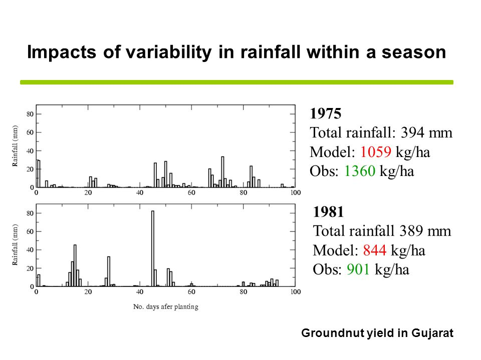 1975 Total rainfall: 394 mm Model: 1059 kg/ha Obs: 1360 kg/ha 1981 Total rainfall 389 mm Model: 844 kg/ha Obs: 901 kg/ha Impacts of variability in rainfall within a season Groundnut yield in Gujarat