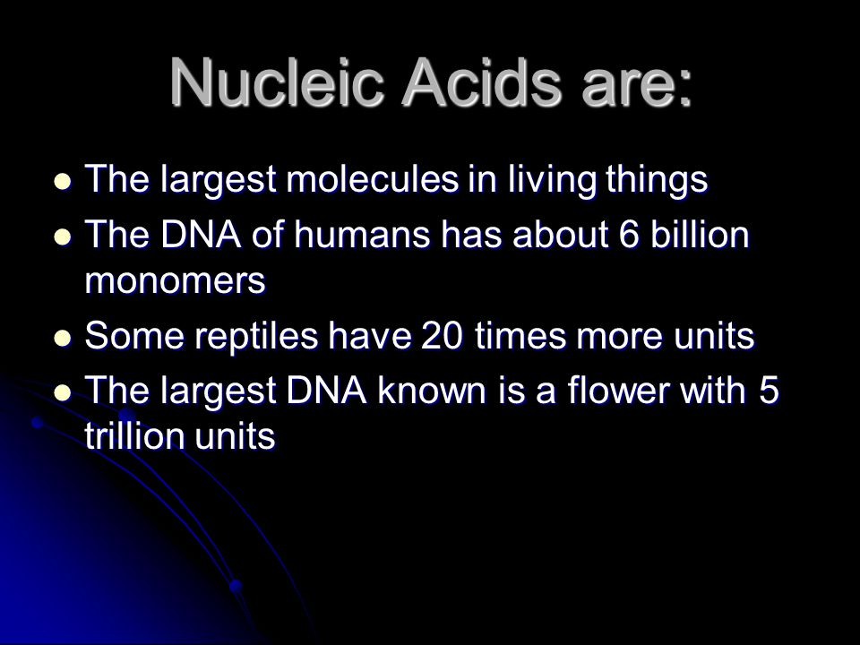 Nucleic Acids are: The largest molecules in living things The largest molecules in living things The DNA of humans has about 6 billion monomers The DNA of humans has about 6 billion monomers Some reptiles have 20 times more units Some reptiles have 20 times more units The largest DNA known is a flower with 5 trillion units The largest DNA known is a flower with 5 trillion units