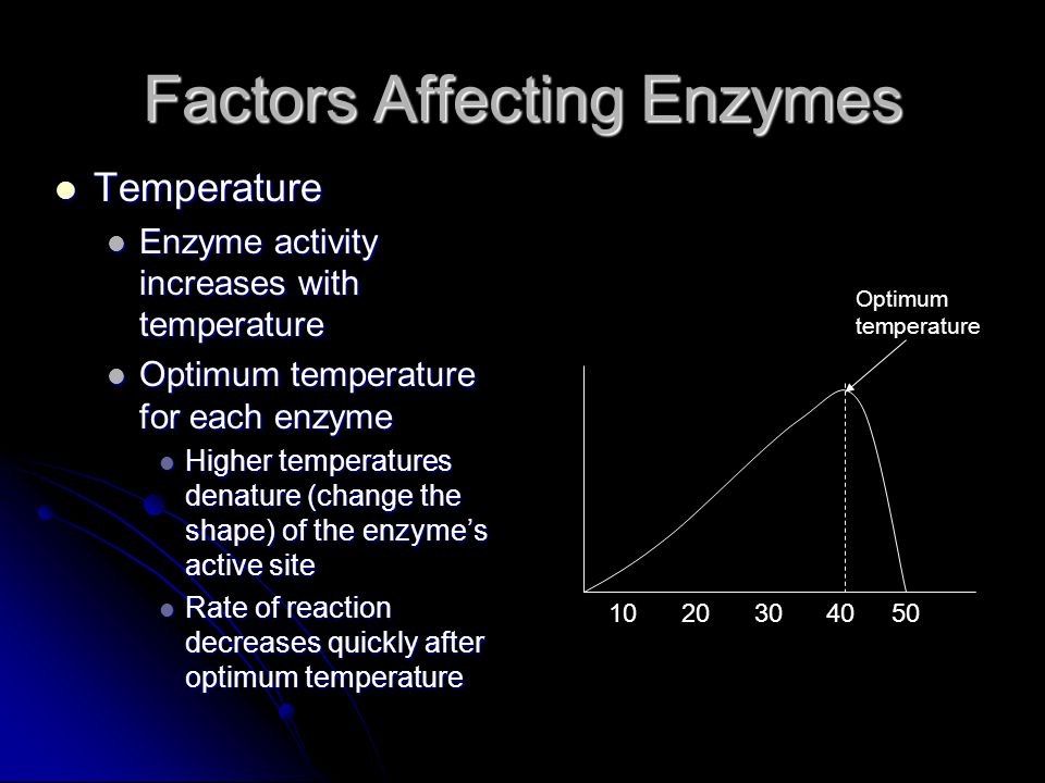 Factors Affecting Enzymes Temperature Temperature Enzyme activity increases with temperature Enzyme activity increases with temperature Optimum temperature for each enzyme Optimum temperature for each enzyme Higher temperatures denature (change the shape) of the enzyme's active site Higher temperatures denature (change the shape) of the enzyme's active site Rate of reaction decreases quickly after optimum temperature Rate of reaction decreases quickly after optimum temperature 10 20 30 40 50 Optimum temperature