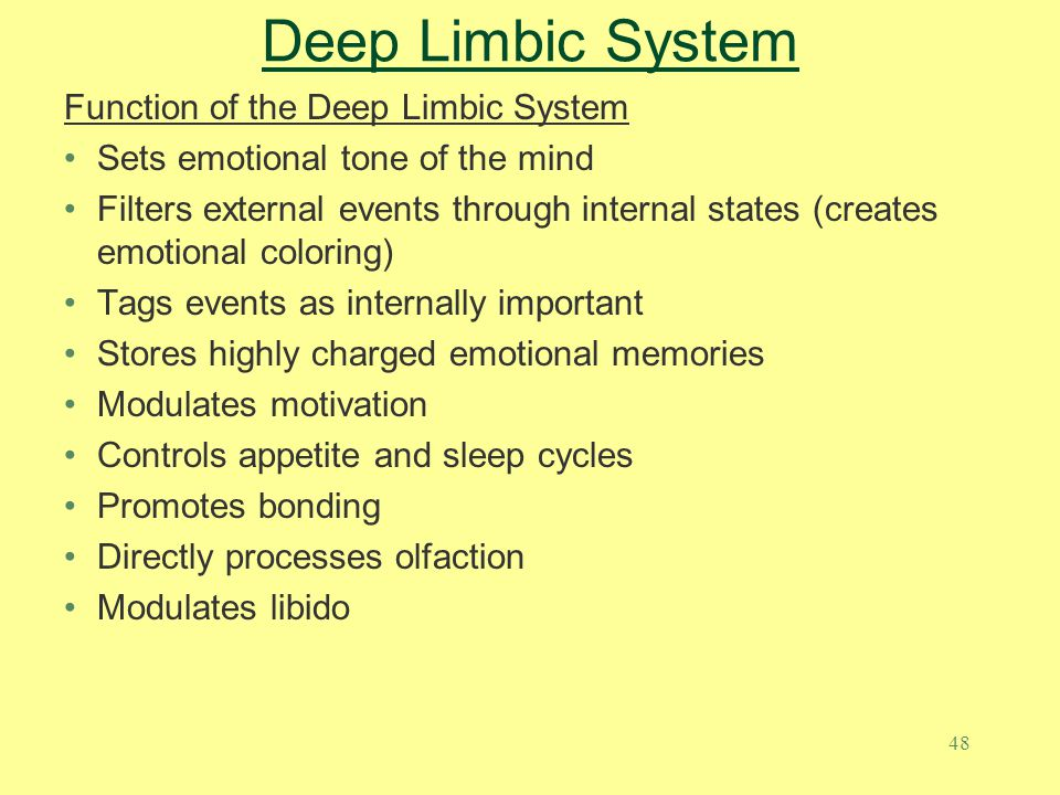48 Deep Limbic System Function of the Deep Limbic System Sets emotional tone of the mind Filters external events through internal states (creates emot