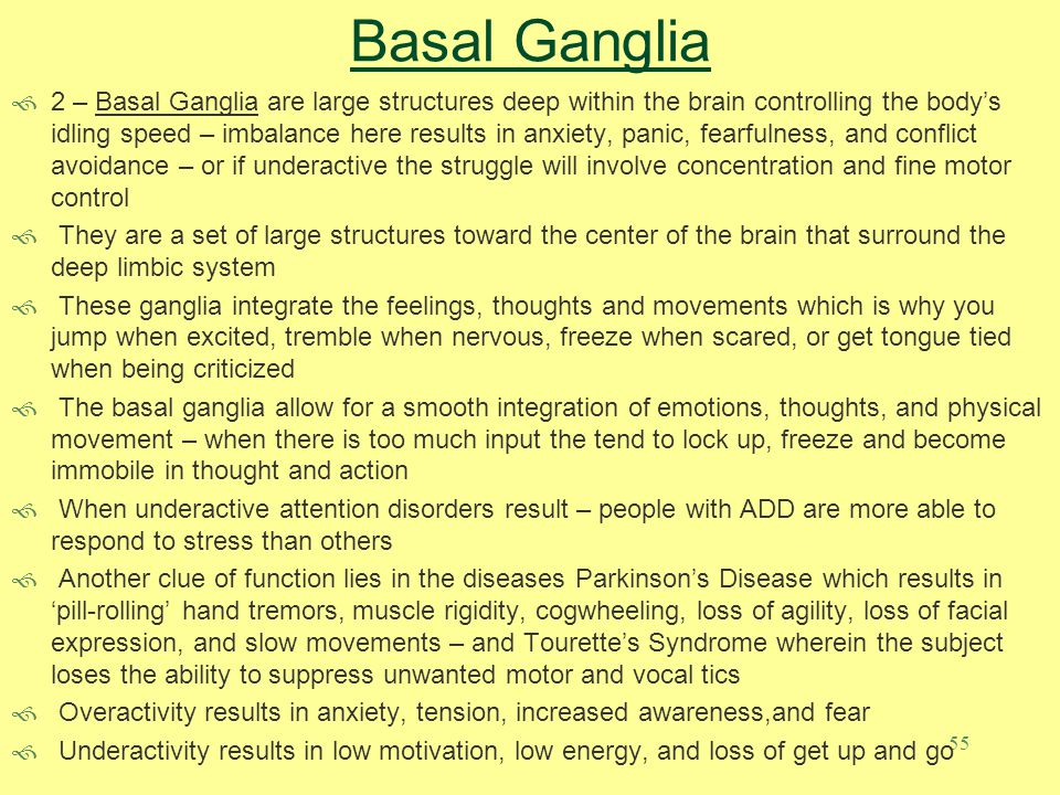 55 Basal Ganglia  2 – Basal Ganglia are large structures deep within the brain controlling the body's idling speed – imbalance here results in anxiet