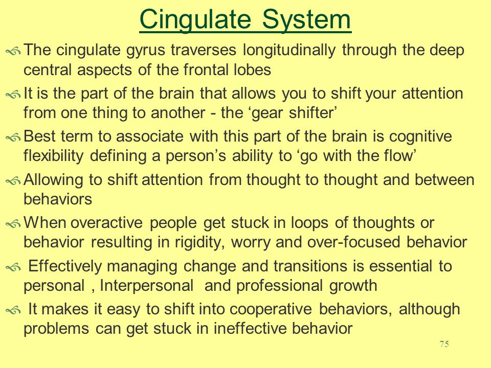 75 Cingulate System  The cingulate gyrus traverses longitudinally through the deep central aspects of the frontal lobes  It is the part of the brain