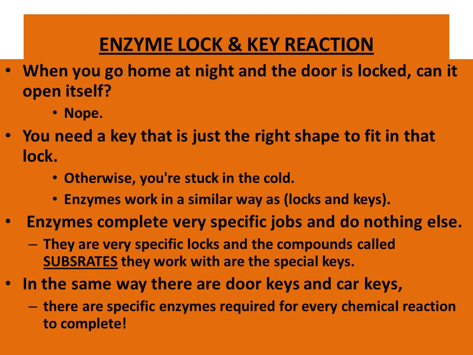 ENZYMES Some types of proteins are enzymes. Enzymes end in ase. Enzymes act as catalysts and help complex reactions occur everywhere in life. – Cataly