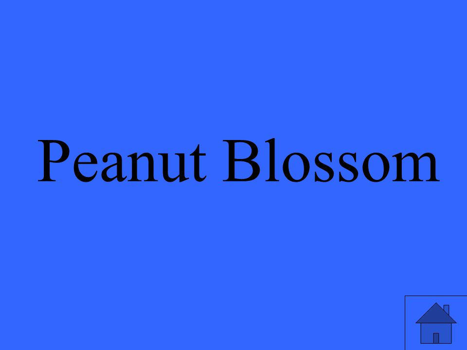 Peanut Blossom