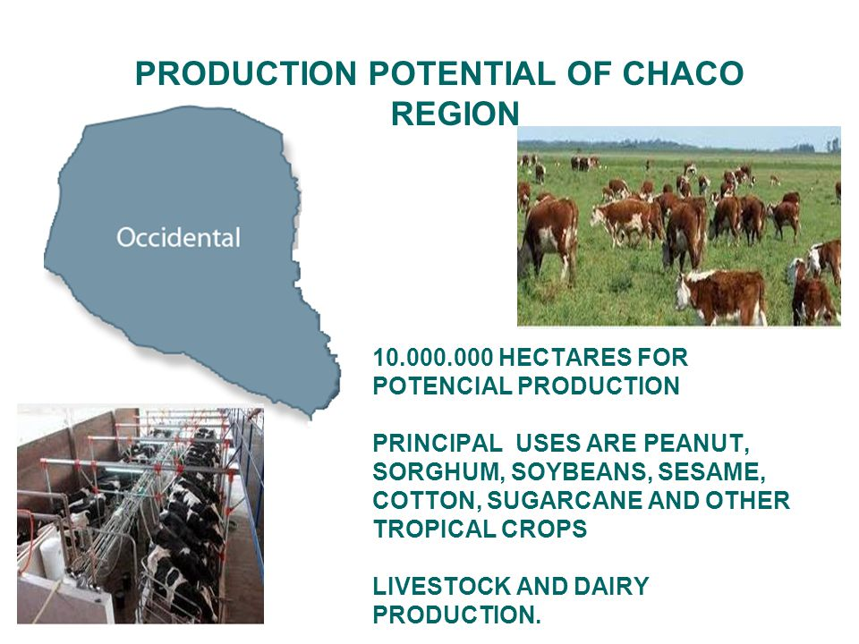PRODUCTION POTENTIAL OF CHACO REGION 10.000.000 HECTARES FOR POTENCIAL PRODUCTION PRINCIPAL USES ARE PEANUT, SORGHUM, SOYBEANS, SESAME, COTTON, SUGARCANE AND OTHER TROPICAL CROPS LIVESTOCK AND DAIRY PRODUCTION.