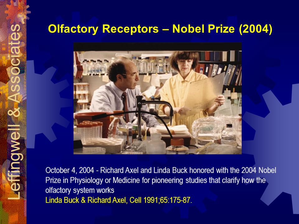 Leffingwell & Associates Olfactory Receptors – Nobel Prize (2004) October 4, 2004 - Richard Axel and Linda Buck honored with the 2004 Nobel Prize in Physiology or Medicine for pioneering studies that clarify how the olfactory system works Linda Buck & Richard Axel, Cell 1991;65:175-87.