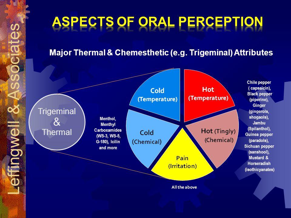 Trigeminal & Thermal Chile pepper ( capsaicin), Black pepper (piperine), Ginger (gingerols, shogaols), Jambu (Spilanthol), Guinea pepper (paradols), Sichuan pepper (sanshool), Mustard & Horseradish (isothicyanates) Menthol, Menthyl Carboxamides (WS-3, WS-5, G-180), Icilin and more Major Thermal & Chemesthetic (e.g.