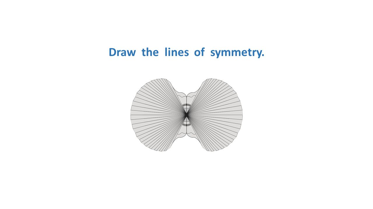 Draw the lines of symmetry.