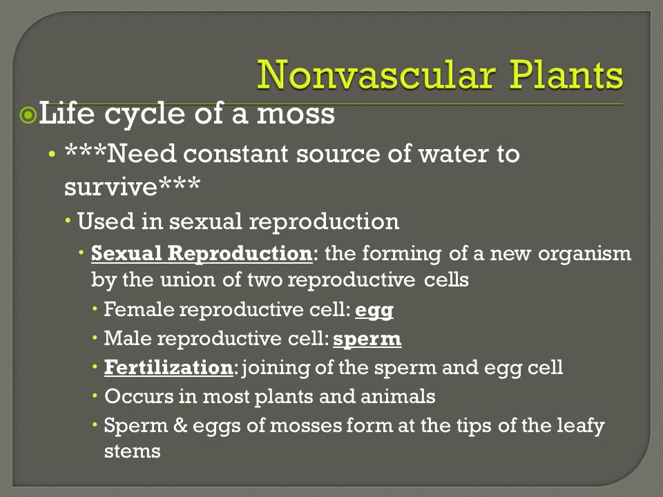  Life cycle of a moss ***Need constant source of water to survive***  Used in sexual reproduction  Sexual Reproduction: the forming of a new organi