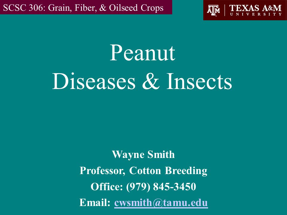 Peanut Diseases & Insects SCSC 306: Grain, Fiber, & Oilseed Crops Wayne Smith Professor, Cotton Breeding Office: (979) 845-3450 Email: cwsmith@tamu.educwsmith@tamu.edu
