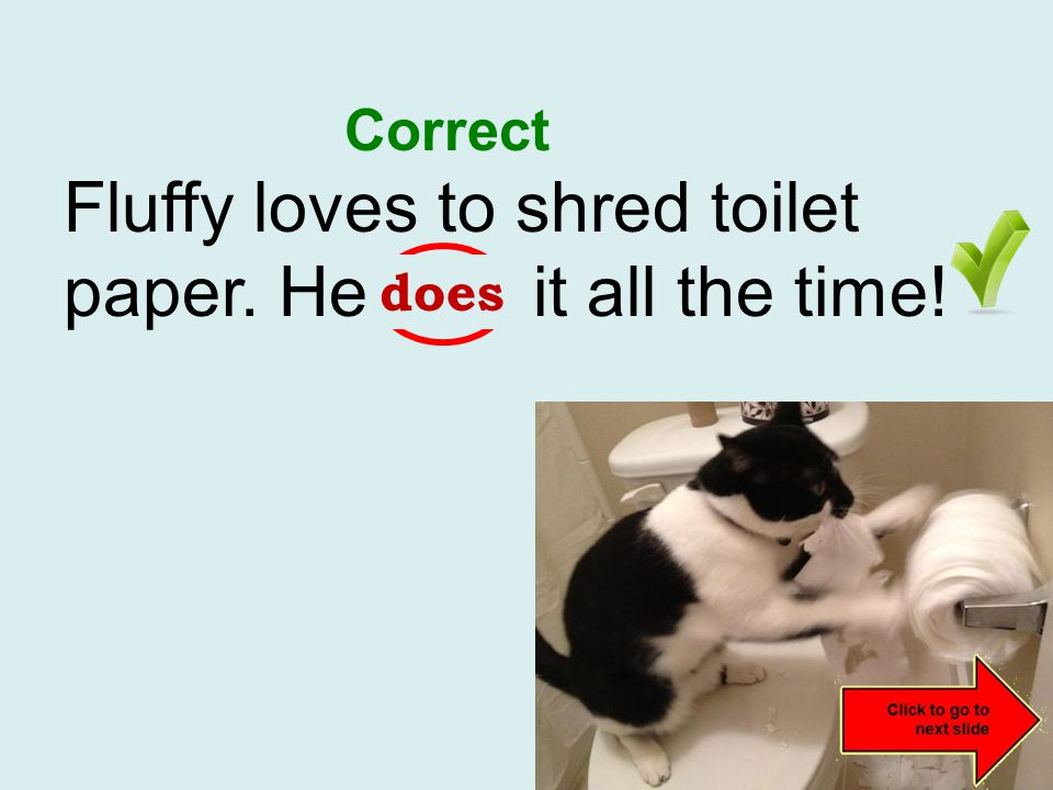Fluffy loves to shred toilet paper. He do it all the time! incorrect does Correct