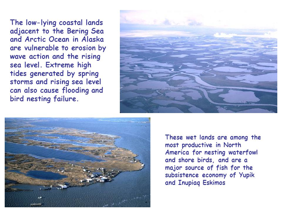 The low-lying coastal lands adjacent to the Bering Sea and Arctic Ocean in Alaska are vulnerable to erosion by wave action and the rising sea level.
