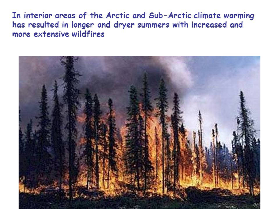 In interior areas of the Arctic and Sub-Arctic climate warming has resulted in longer and dryer summers with increased and more extensive wildfires