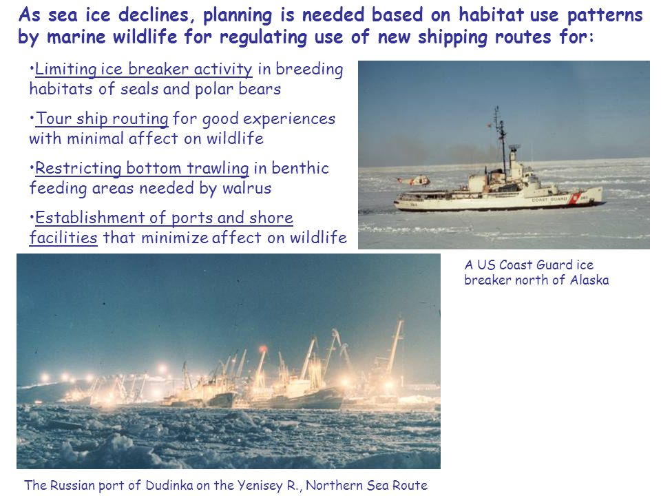 As sea ice declines, planning is needed based on habitat use patterns by marine wildlife for regulating use of new shipping routes for: Limiting ice breaker activity in breeding habitats of seals and polar bears Tour ship routing for good experiences with minimal affect on wildlife Restricting bottom trawling in benthic feeding areas needed by walrus Establishment of ports and shore facilities that minimize affect on wildlife The Russian port of Dudinka on the Yenisey R., Northern Sea Route A US Coast Guard ice breaker north of Alaska