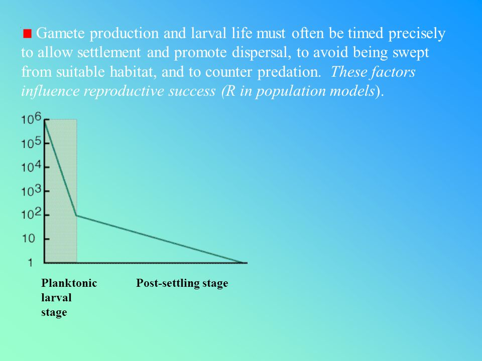 Gamete production and larval life must often be timed precisely to allow settlement and promote dispersal, to avoid being swept from suitable habitat, and to counter predation.