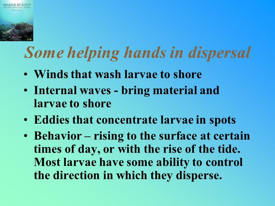 Some helping hands in dispersal Winds that wash larvae to shore Internal waves - bring material and larvae to shore Eddies that concentrate larvae in spots Behavior – rising to the surface at certain times of day, or with the rise of the tide.