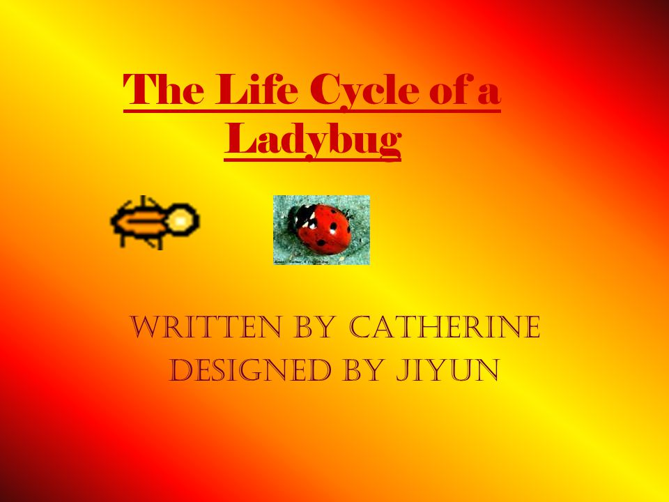 The Life Cycle of a Ladybug Written By Catherine designed by Jiyun