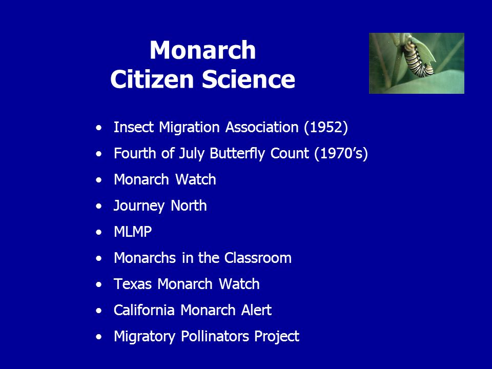 Monarch Citizen Science Insect Migration Association (1952) Fourth of July Butterfly Count (1970's) Monarch Watch Journey North MLMP Monarchs in the Classroom Texas Monarch Watch California Monarch Alert Migratory Pollinators Project