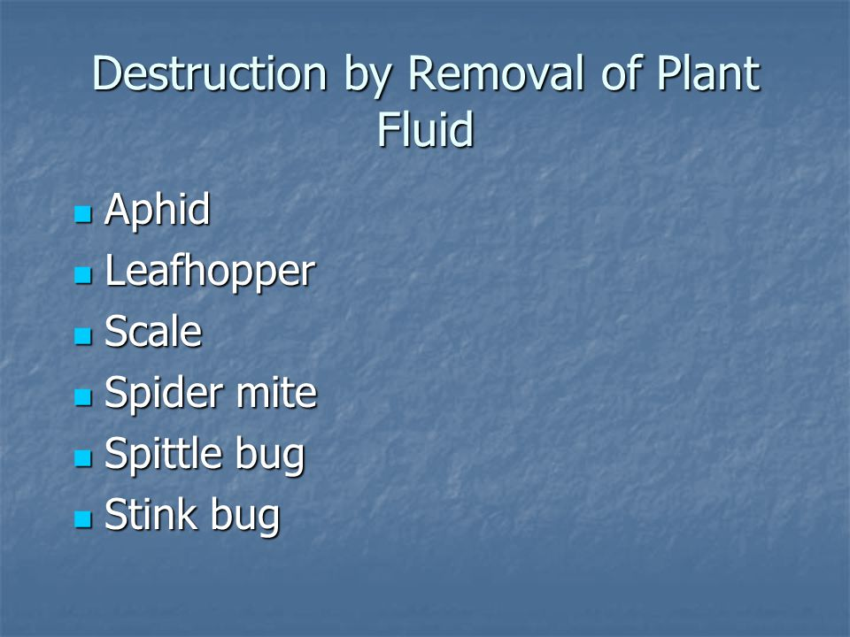Destruction by Removal of Plant Fluid Aphid Aphid Leafhopper Leafhopper Scale Scale Spider mite Spider mite Spittle bug Spittle bug Stink bug Stink bu