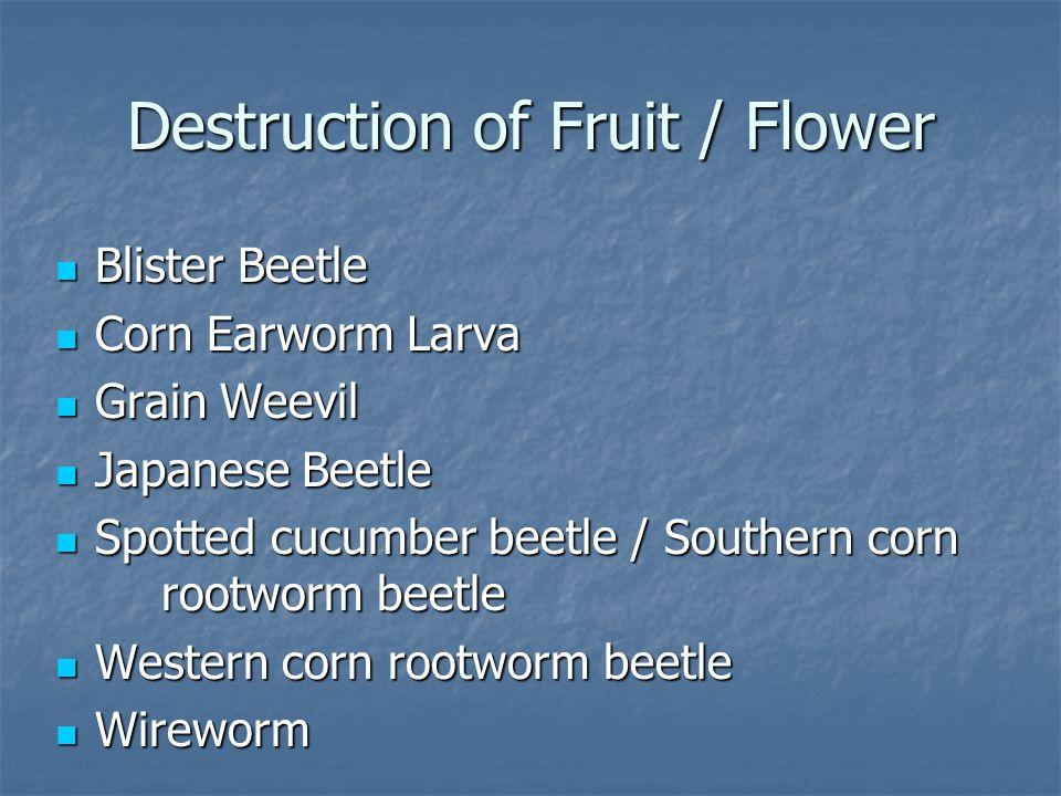 Destruction of Fruit / Flower Blister Beetle Blister Beetle Corn Earworm Larva Corn Earworm Larva Grain Weevil Grain Weevil Japanese Beetle Japanese B