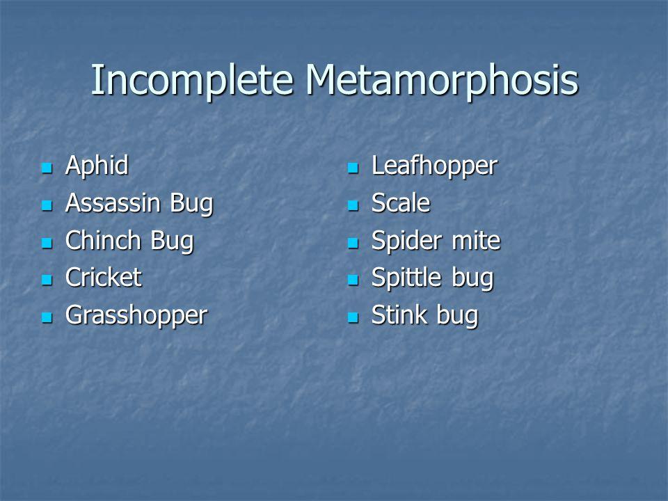 Incomplete Metamorphosis Aphid Aphid Assassin Bug Assassin Bug Chinch Bug Chinch Bug Cricket Cricket Grasshopper Grasshopper Leafhopper Leafhopper Sca