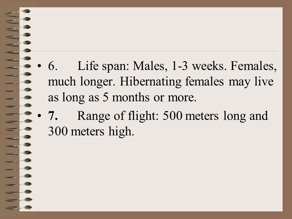 6. Life span: Males, 1-3 weeks. Females, much longer. Hibernating females may live as long as 5 months or more. 7. Range of flight: 500 meters long an