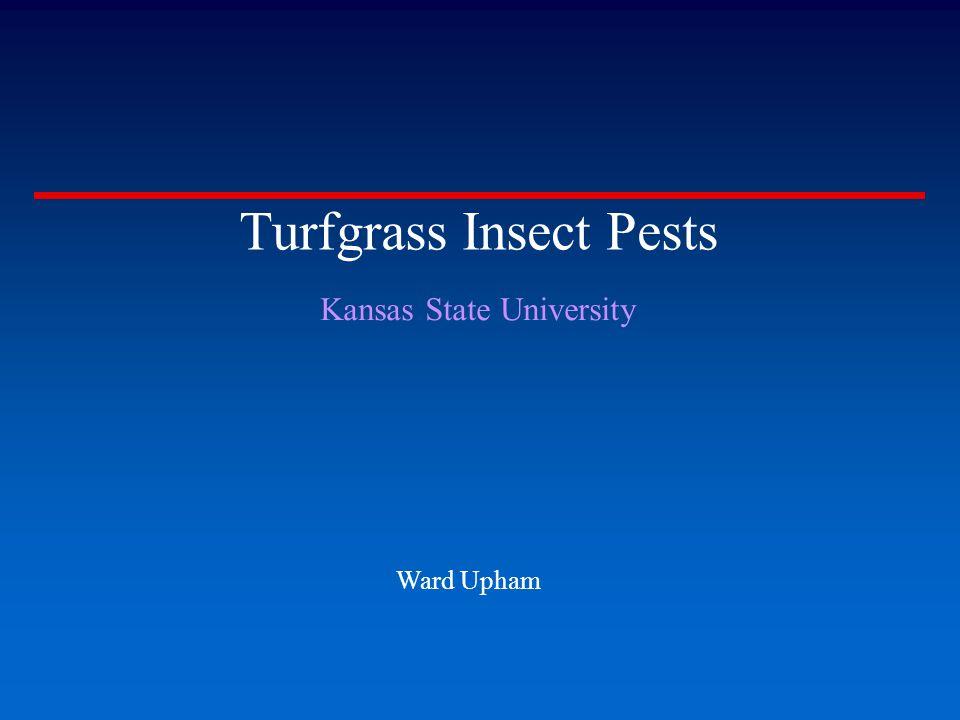 Turfgrass Insect Pests Kansas State University Ward Upham