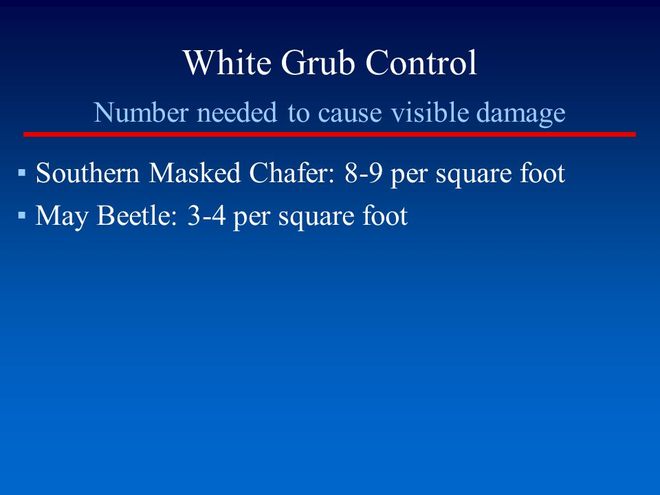 White Grub Control Number needed to cause visible damage ▪Southern Masked Chafer: 8-9 per square foot ▪May Beetle: 3-4 per square foot