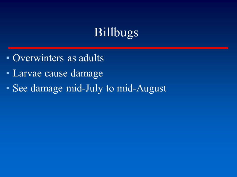 Billbugs ▪Overwinters as adults ▪Larvae cause damage ▪See damage mid-July to mid-August