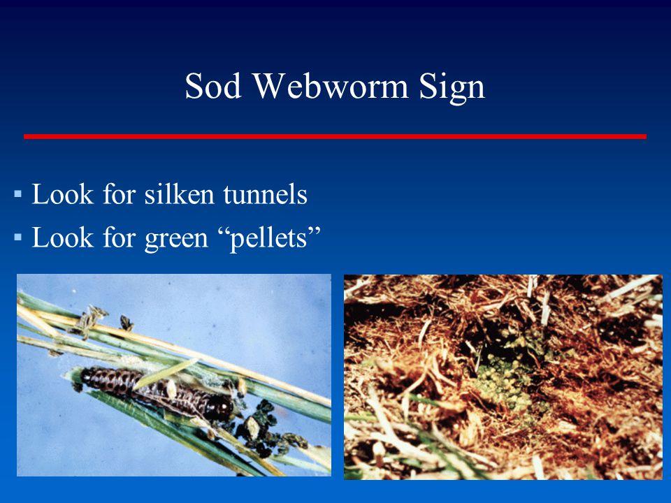 "Sod Webworm Sign ▪Look for silken tunnels ▪Look for green ""pellets"""