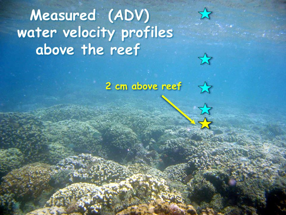 Measured (ADV) water velocity profiles above the reef Measured (ADV) water velocity profiles above the reef 2 cm above reef