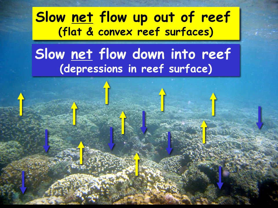 Slow net flow up out of reef (flat & convex reef surfaces) Slow net flow up out of reef (flat & convex reef surfaces) Slow net flow down into reef (depressions in reef surface) Slow net flow down into reef (depressions in reef surface)