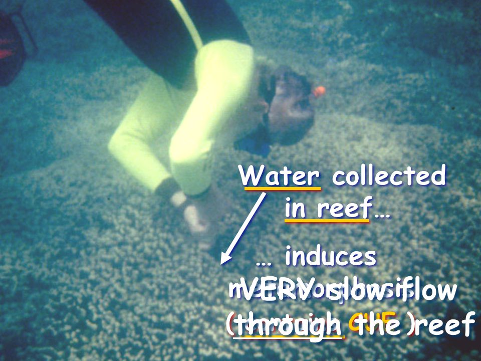 Water collected in reef… Water collected in reef… … induces metamorphosis … induces metamorphosis ( contains CUE ) VERY slow flow through the reef VERY slow flow through the reef