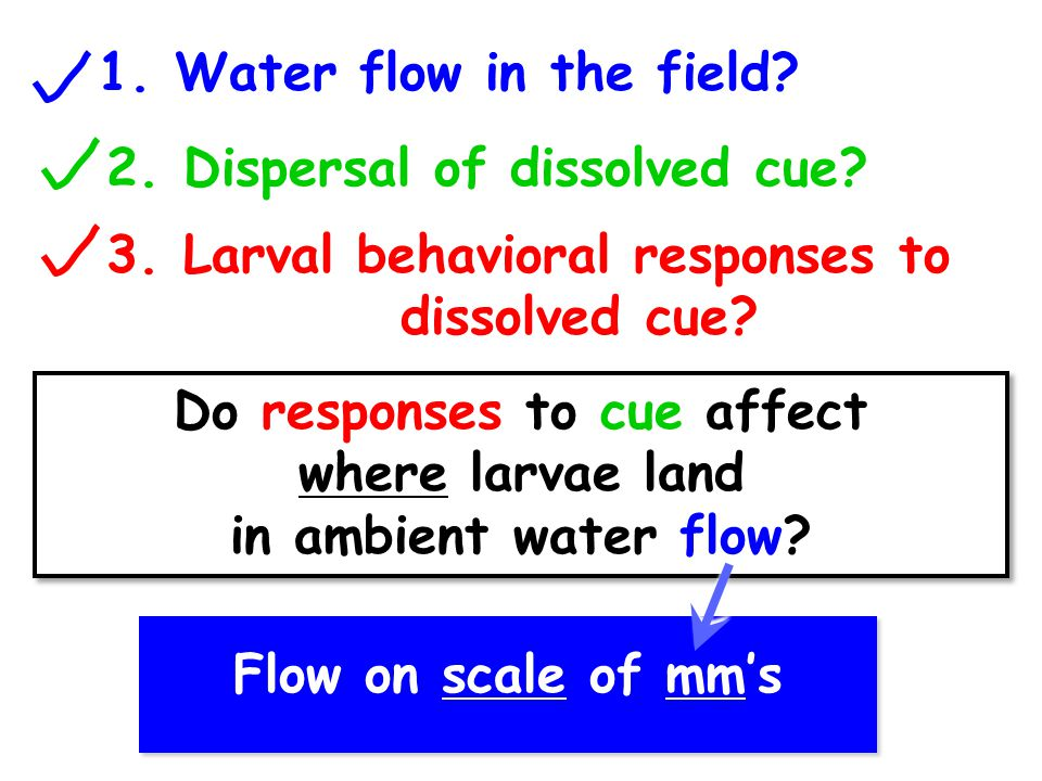 1. Water flow in the field. 2. Dispersal of dissolved cue.
