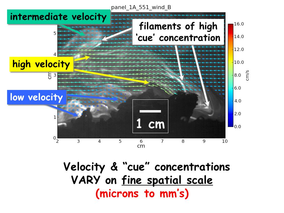 Velocity & cue concentrations VARY on fine spatial scale (microns to mm's) filaments of high 'cue' concentration filaments of high 'cue' concentration intermediate velocity high velocity low velocity 1 cm