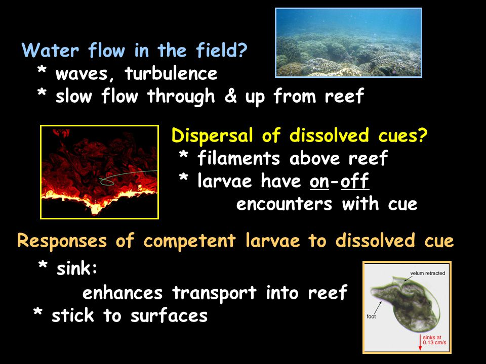 Dispersal of dissolved cues.
