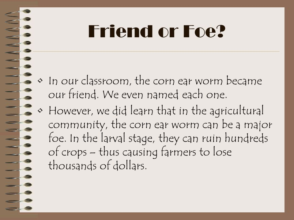Friend or Foe.In our classroom, the corn ear worm became our friend.