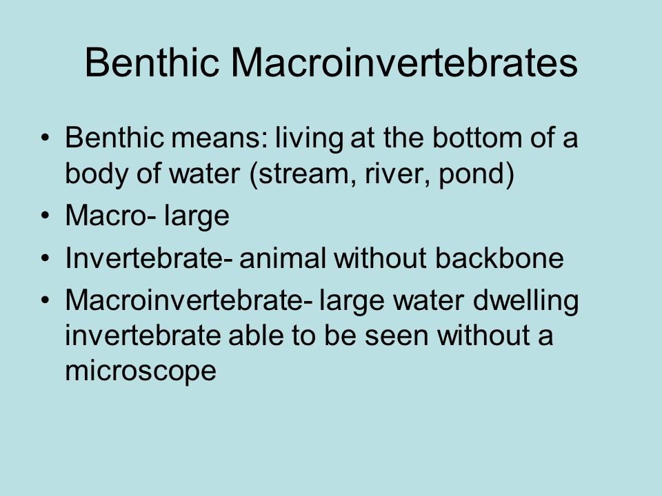Benthic Macroinvertebrates Benthic means: living at the bottom of a body of water (stream, river, pond) Macro- large Invertebrate- animal without backbone Macroinvertebrate- large water dwelling invertebrate able to be seen without a microscope