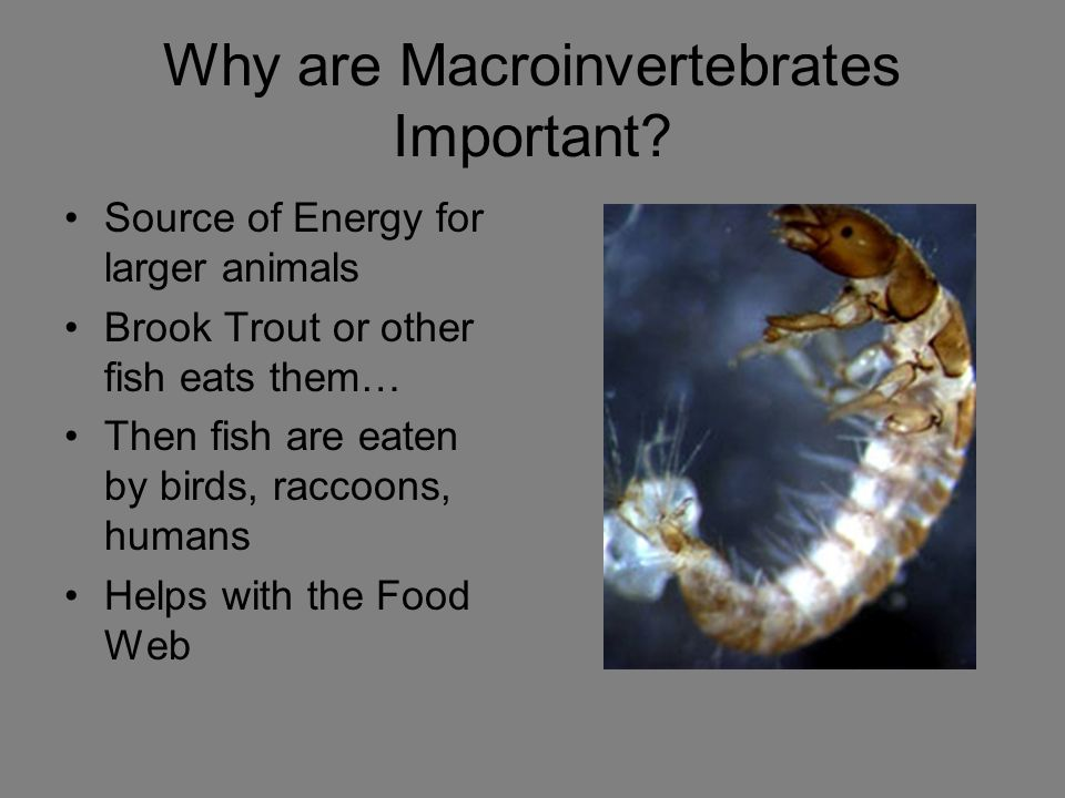 Why are Macroinvertebrates Important.