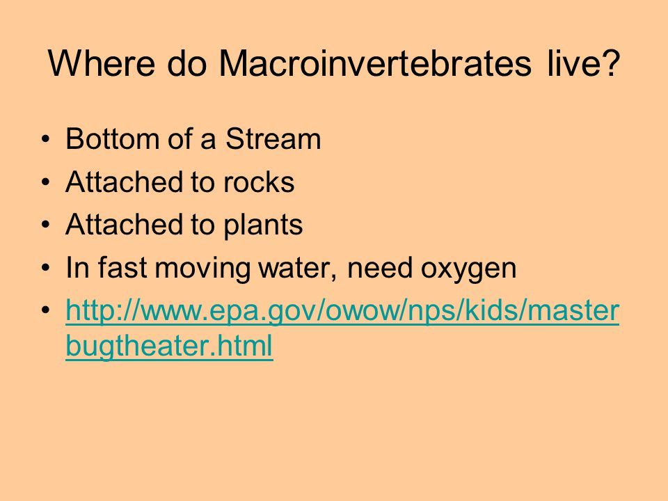 Where do Macroinvertebrates live? Bottom of a Stream Attached to rocks Attached to plants In fast moving water, need oxygen http://www.epa.gov/owow/np