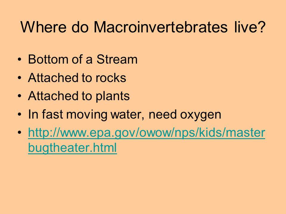 Where do Macroinvertebrates live.