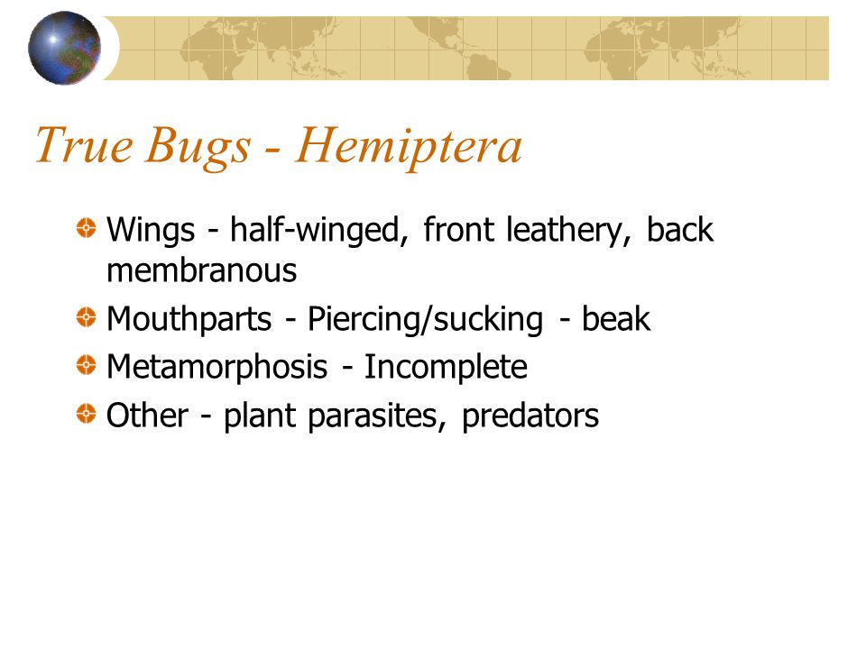 True Bugs - Hemiptera Wings - half-winged, front leathery, back membranous Mouthparts - Piercing/sucking - beak Metamorphosis - Incomplete Other - plant parasites, predators