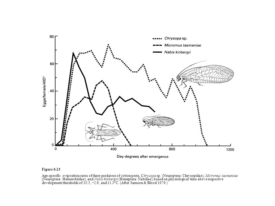 Figure 6.13 Age-specific oviposition rates of three predators of cotton pests, Chrysopa sp.