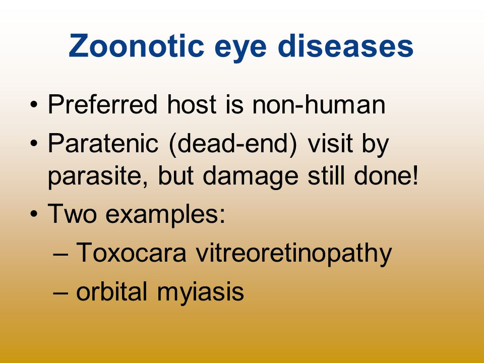 Zoonotic eye diseases Preferred host is non-human Paratenic (dead-end) visit by parasite, but damage still done! Two examples: – Toxocara vitreoretino