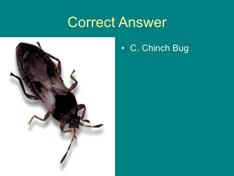 Correct Answer C. Chinch Bug