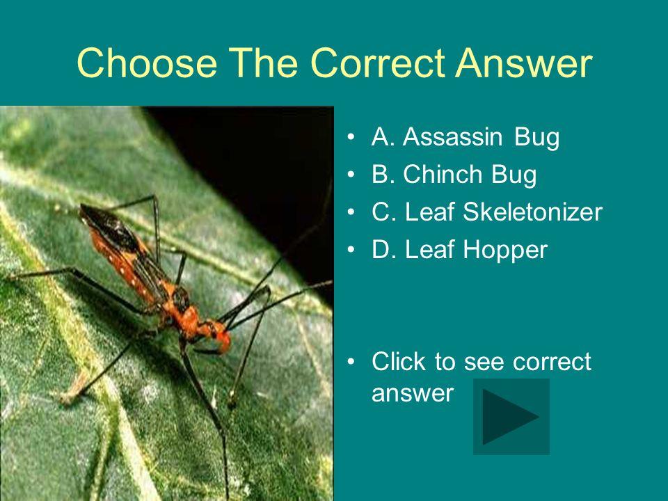 Choose The Correct Answer A. Assassin Bug B. Chinch Bug C.