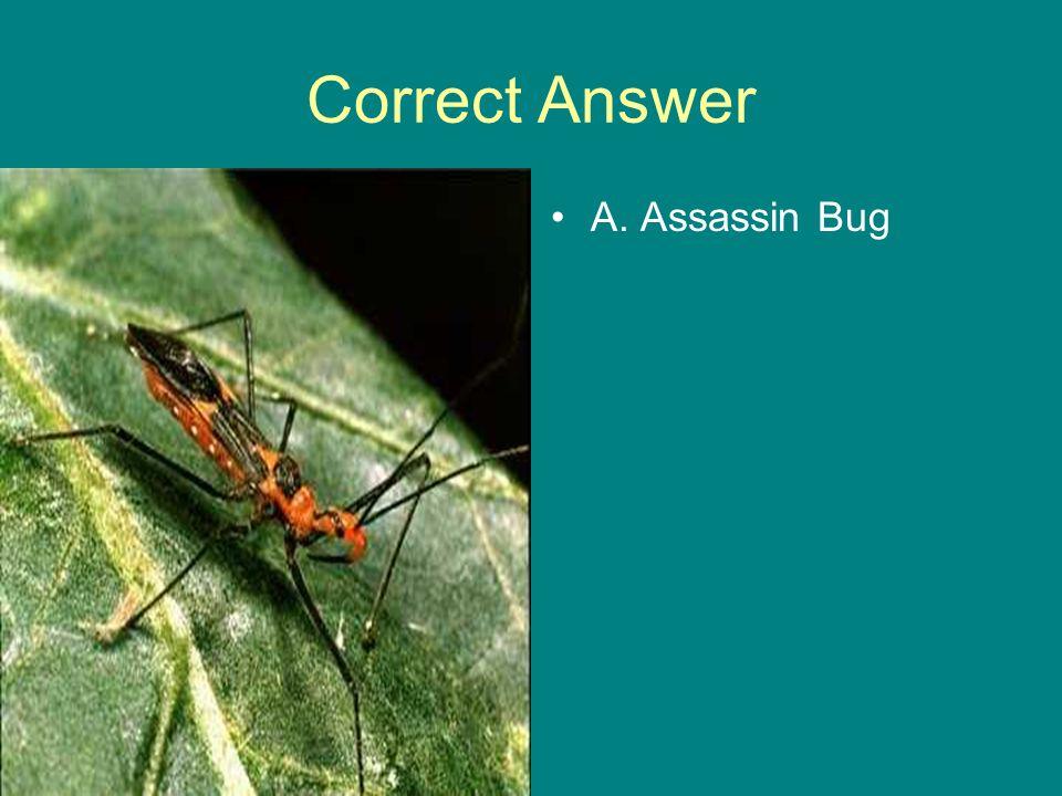 Correct Answer A. Assassin Bug